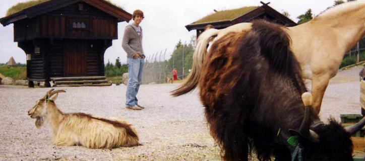 Young American man in the distance looking at some livestock in Norway