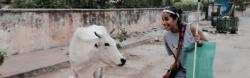 Esha Mehta encountering a cow in the streets of India