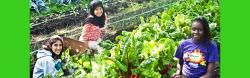 Safira gardening as a volunteer with other exchange students
